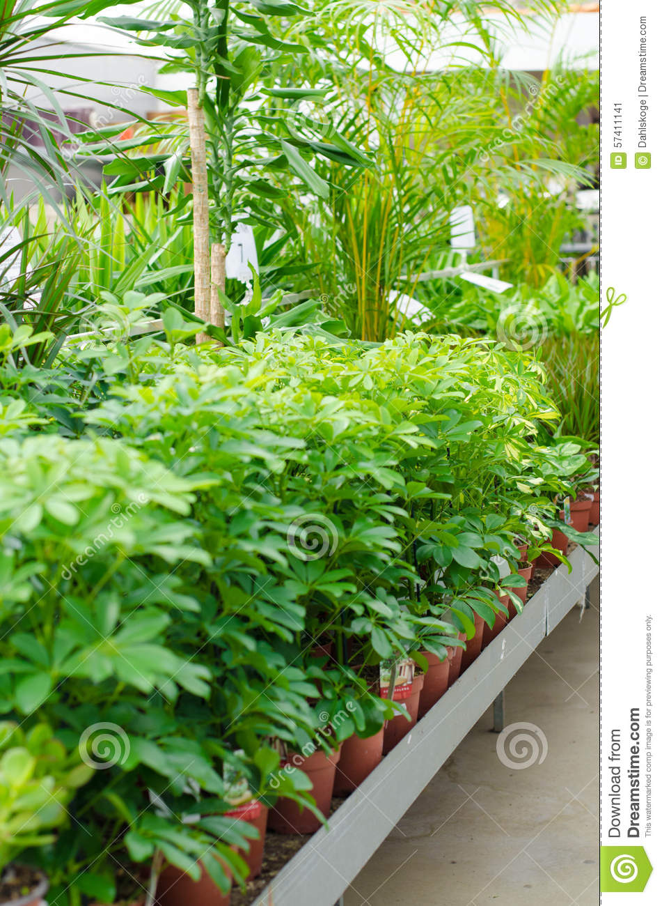 Plants for sale stock photo image 57411141 for Plants for sale