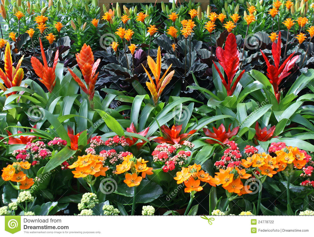 Plants for sale from a florist in a nursery of flowers for Plants for sale
