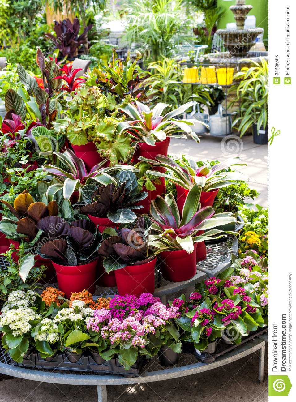 plants for sale in nursery stock photo. image of assorted - 31496586
