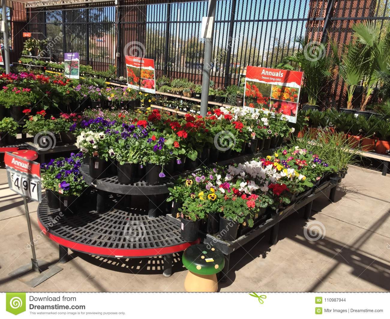 plants for sale in nursery editorial stock image. image of sale