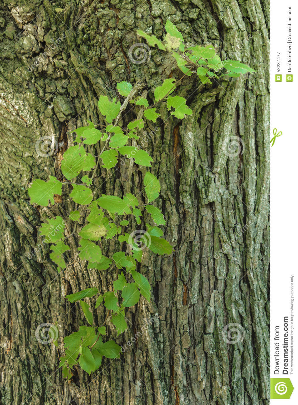 Plants which grow from the trunk stock photo image 53237477 - Flowers that grow on tree trunks ...