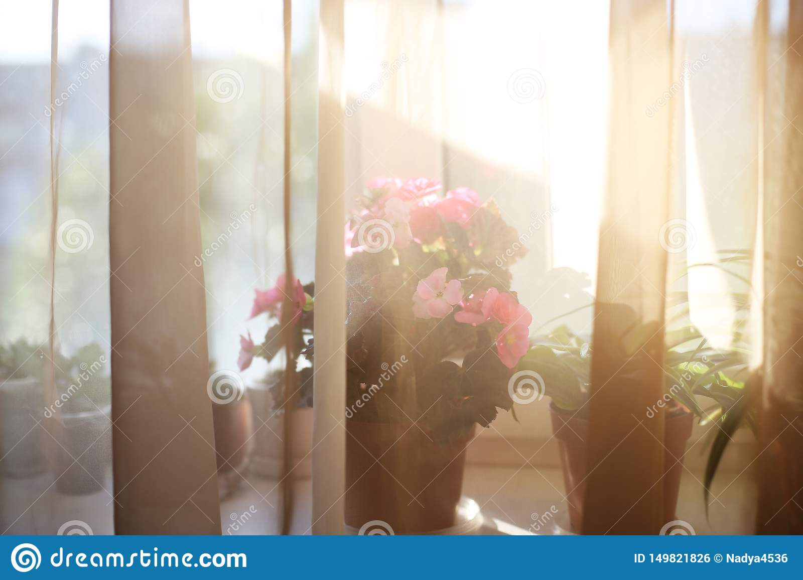Plants on the windowsill sunset interior home flowers for store shop