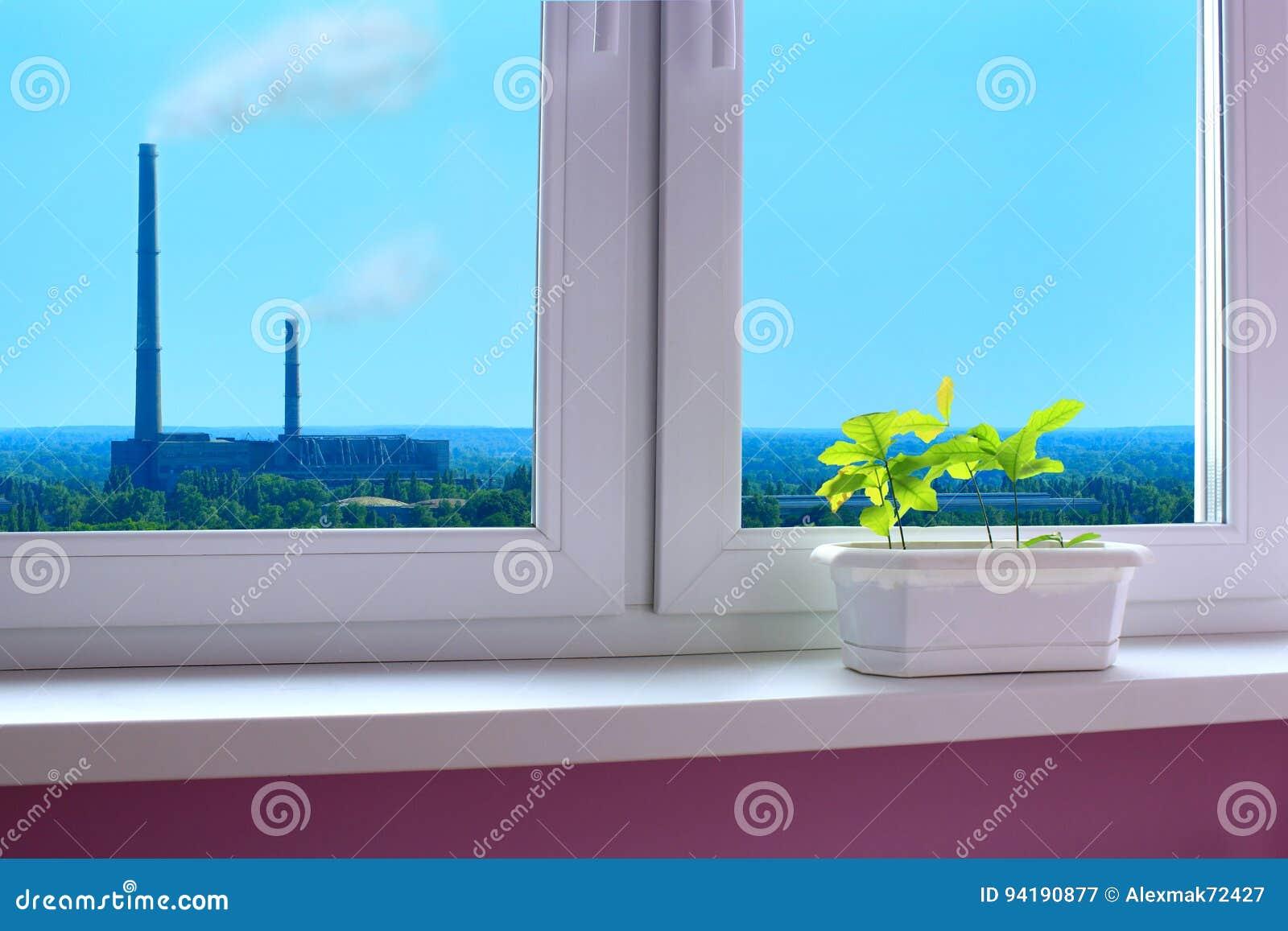 Plantule delle querce sul finestra-davanzale e della vista all inquinamento ambientale ad opera di industria