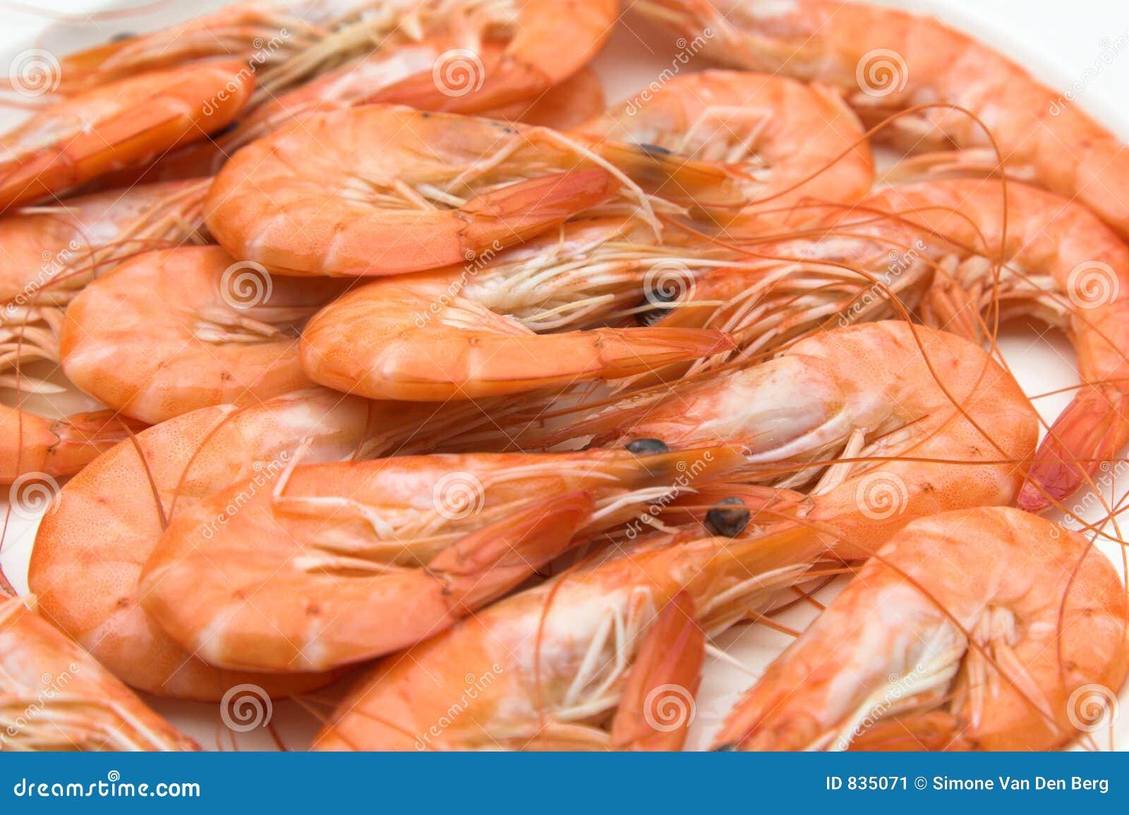 Plaque des crevettes roses