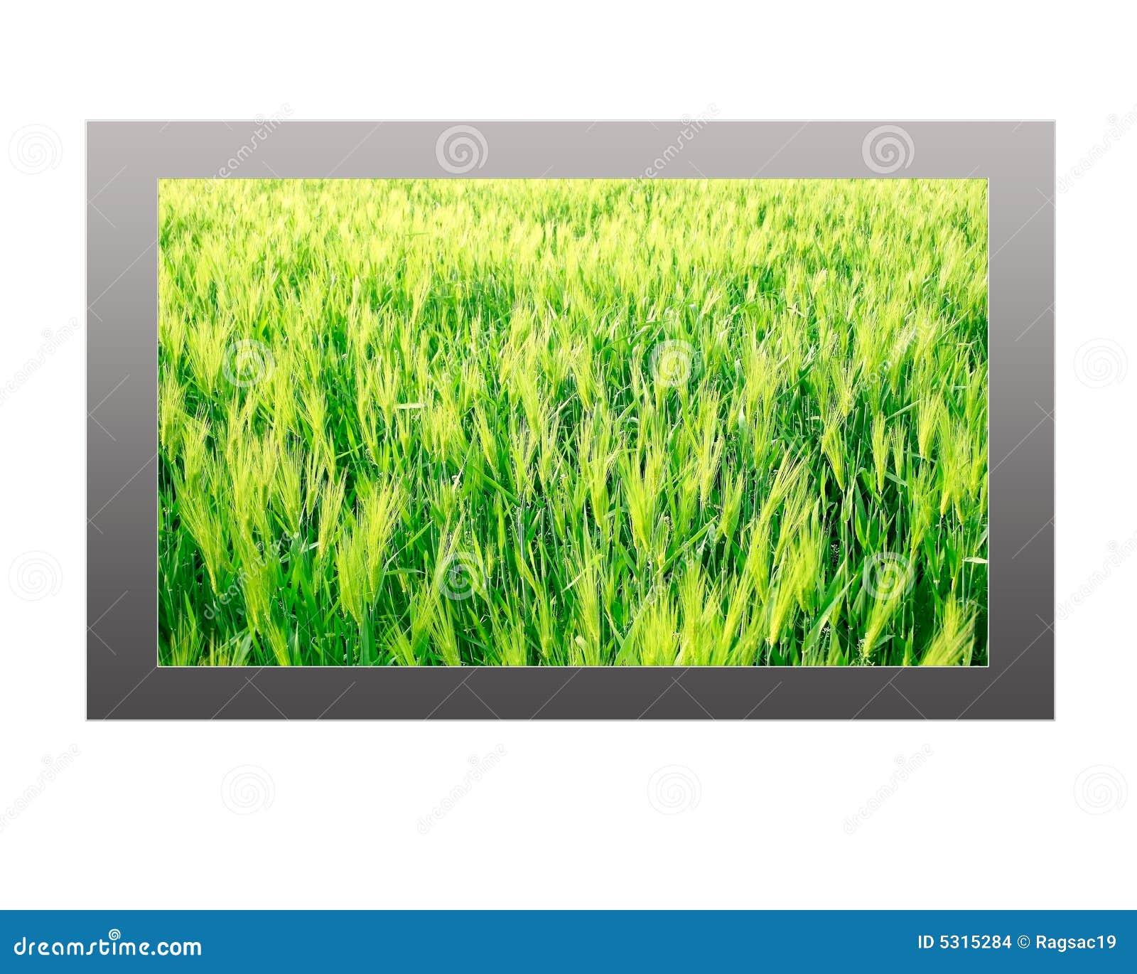 Download Plasma TV Con La Visualizzazione Di Paesaggio Della Sorgente Fotografia Stock - Immagine di radiodiffusione, canale: 5315284