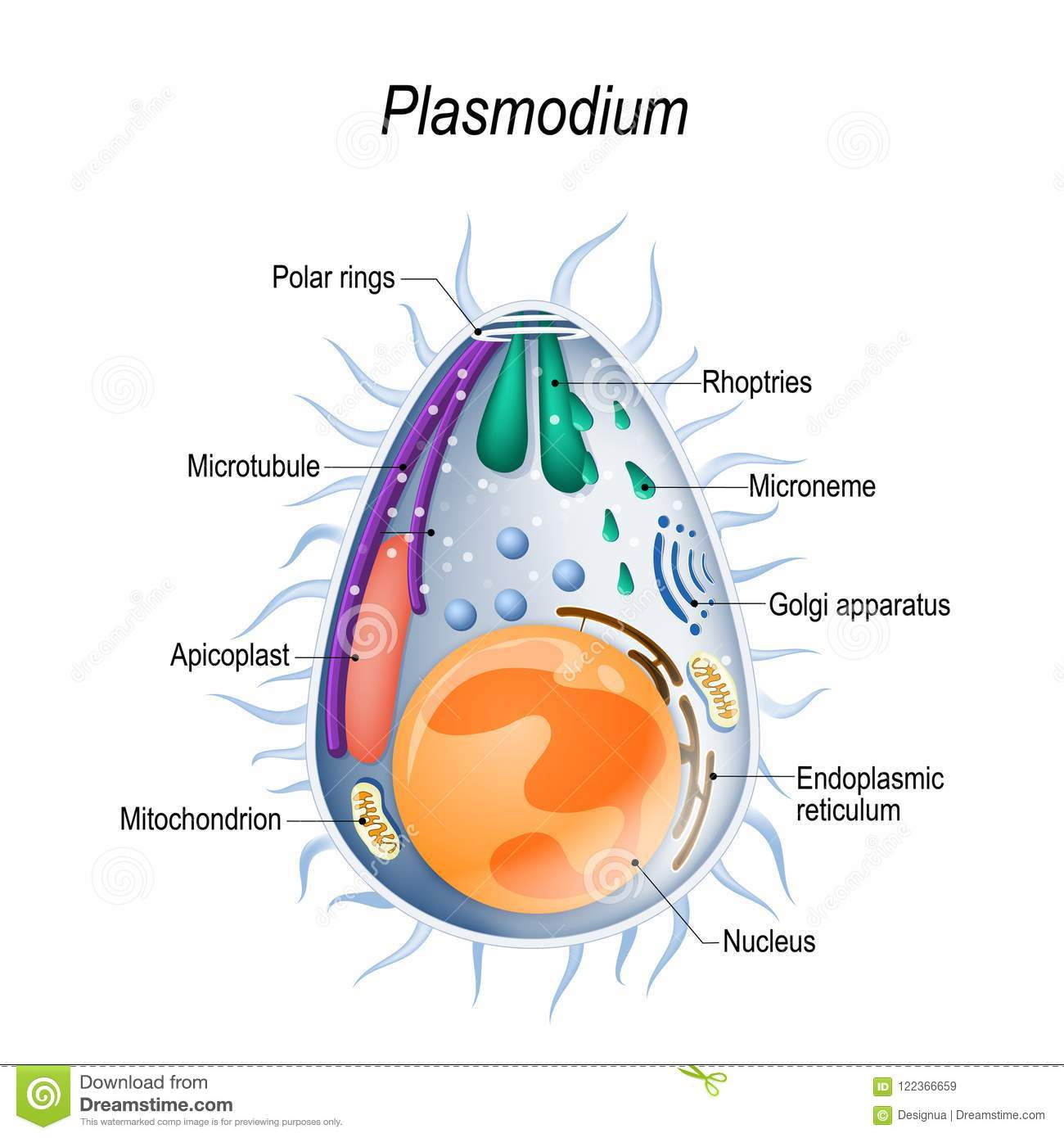 Plasmodium Cartoons  Illustrations  U0026 Vector Stock Images