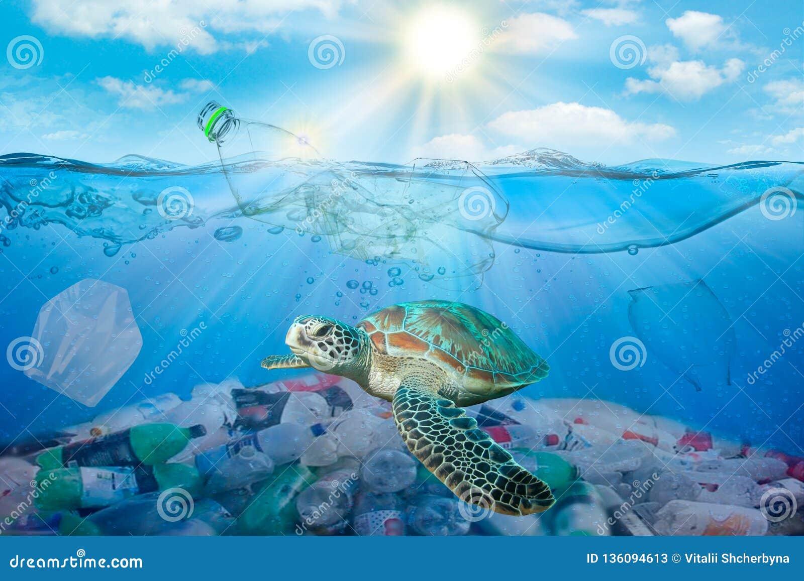 Plast- förorening i miljö- problem för hav Sköldpaddor kan äta plastpåsar som missförstår dem för manet smutsigt vattenbegrepp