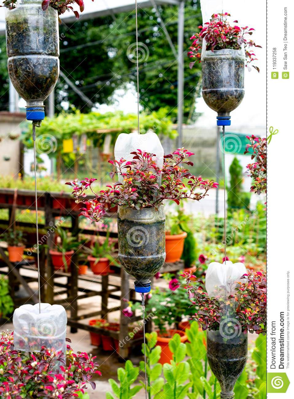 Recycle Plastic Bottles As Flower Pots Stock Photo Image Of Conservation Hanging 119337258