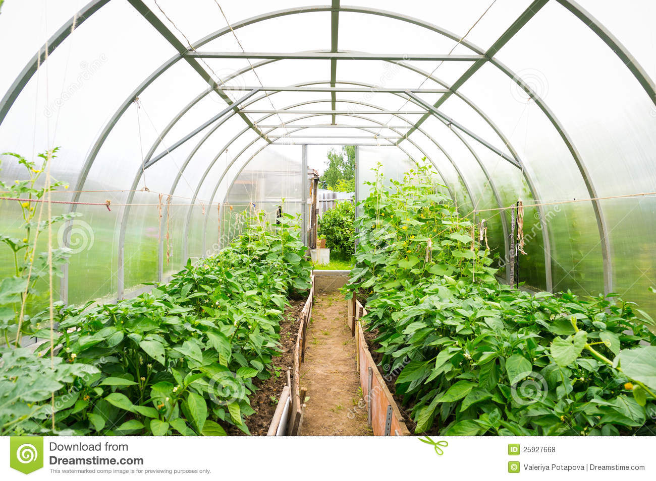 Plastic Covered Horticulture Greenhouse Royalty Free Stock Photos ...