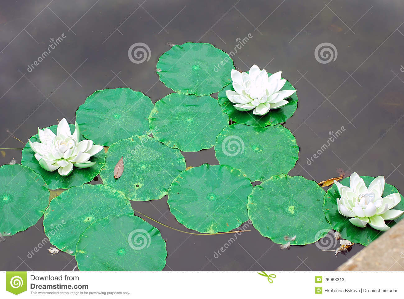 Plastic Decoration Of Water Lilies On Water Stock Photos