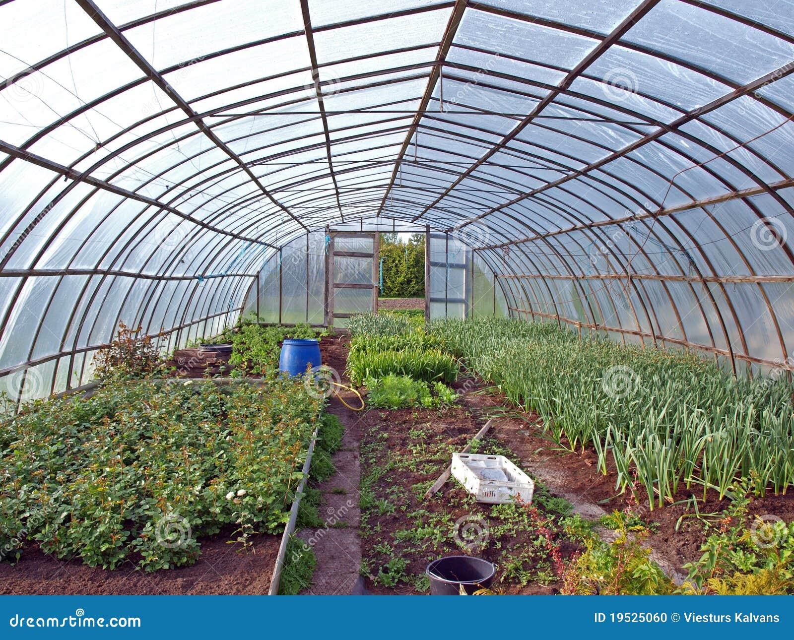 Plastic greenhouse inside stock photo image 19525060 for Irrigazione serra