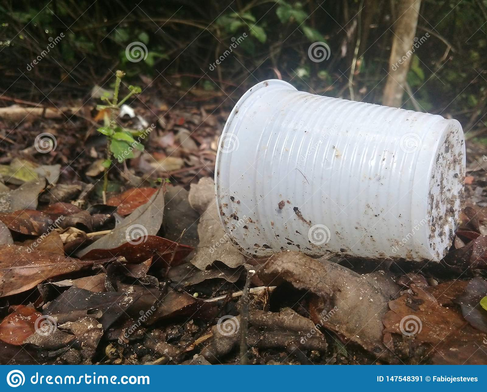 Plastic kop en de verontreiniging op mangrove