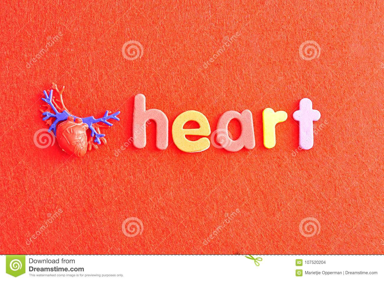 A plastic model of a human heart with the word heart