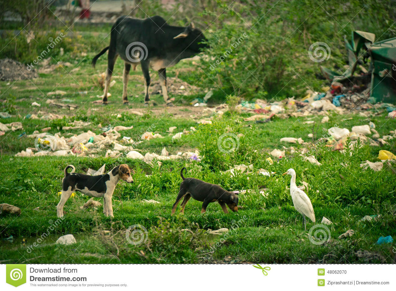 Plastic Pollution During Animals Stock Photo Image 48062070
