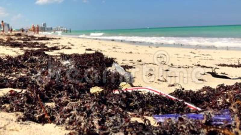 Plastic and seaweed Miami Beach