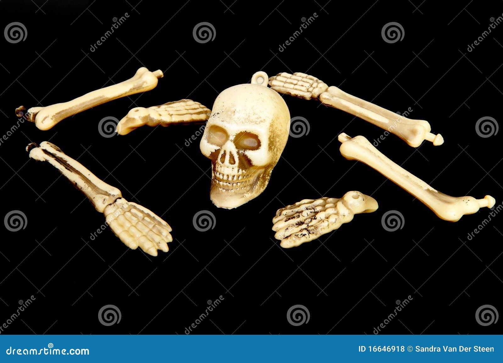 Plastic skull and bones