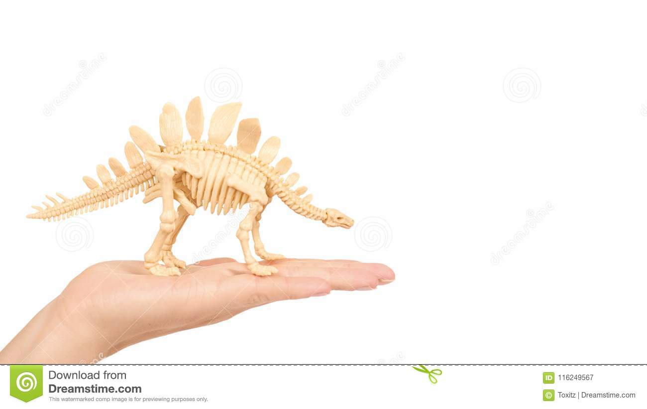 plastic toy animal dinosaur skeleton in hand isolated on white