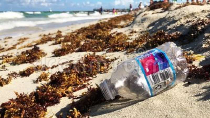 Plastic water bottle with sargassum seaweed on the beach