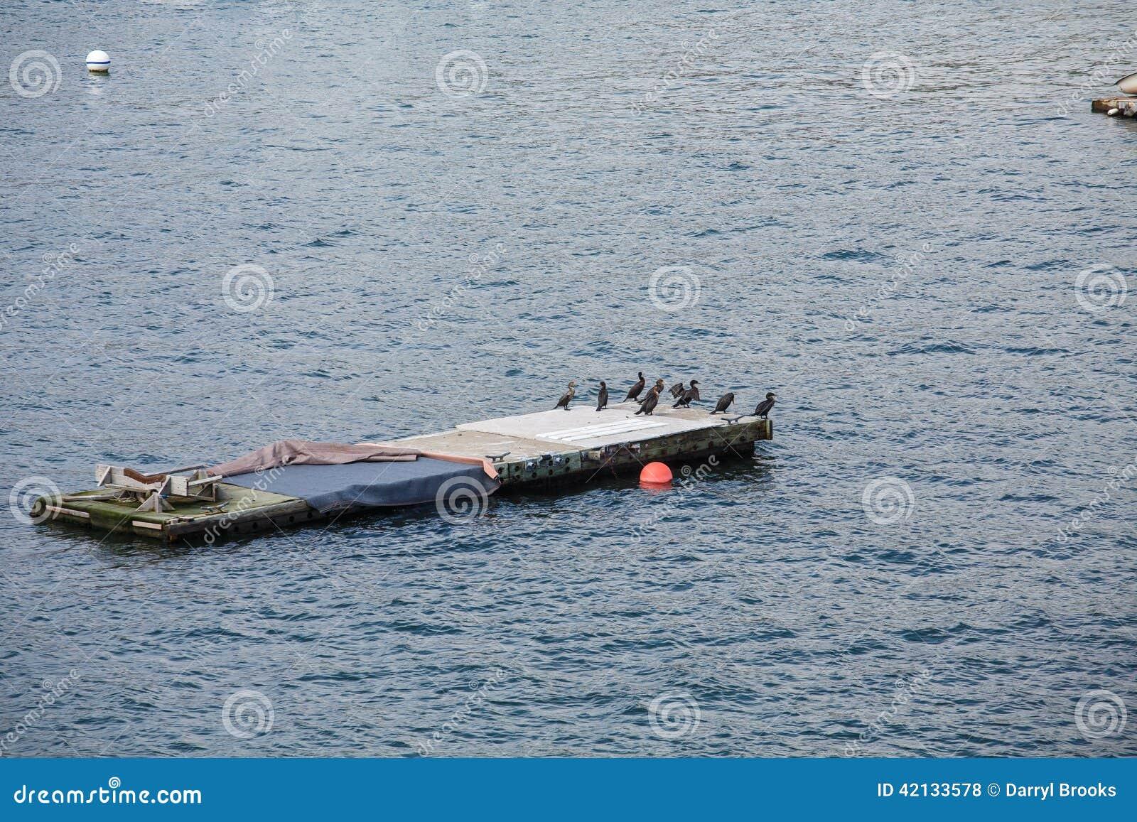 Plate-forme d amarrage dans le port avec les oiseaux marins