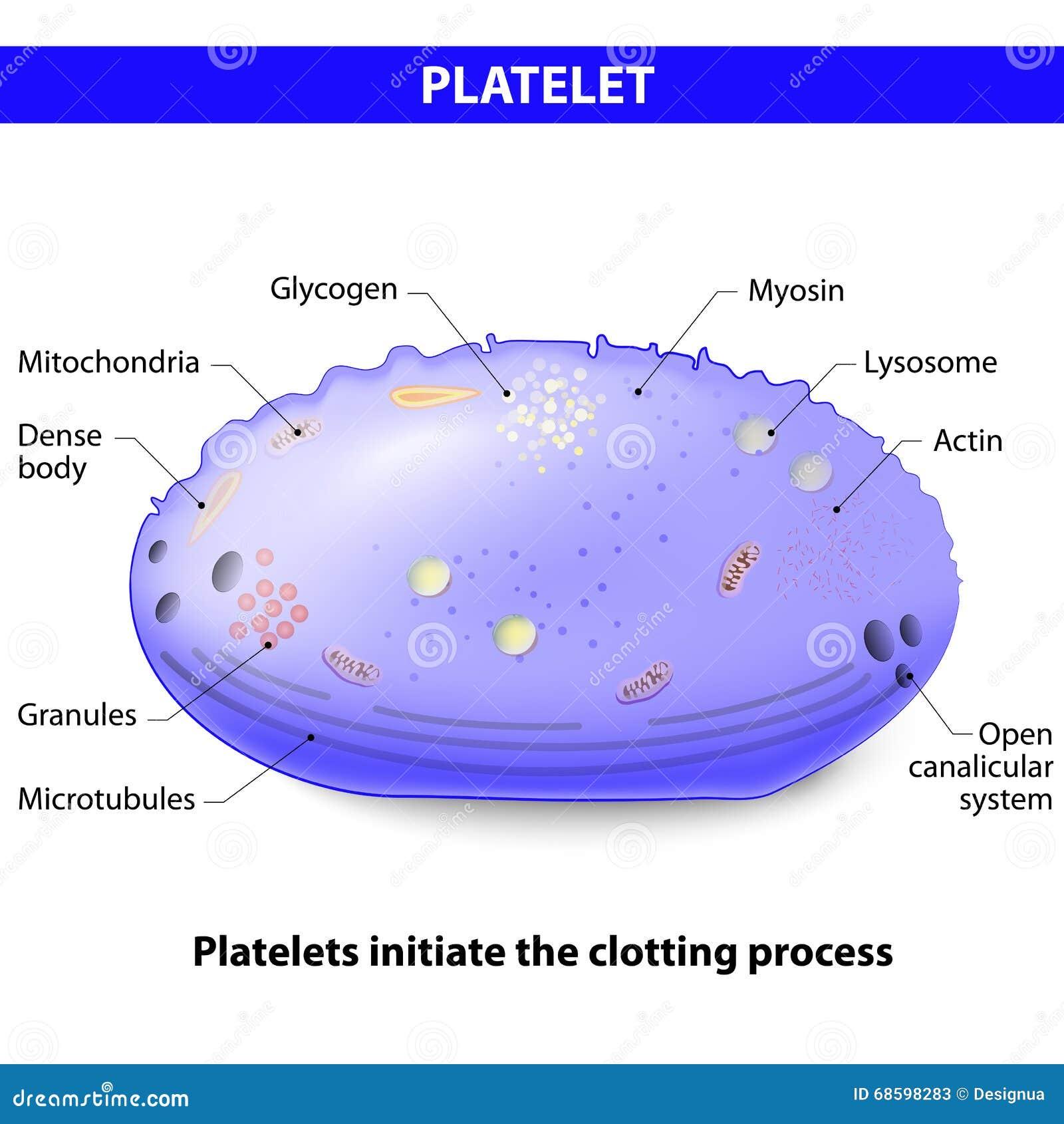 platelets or thrombocytes stock photo image 68598283