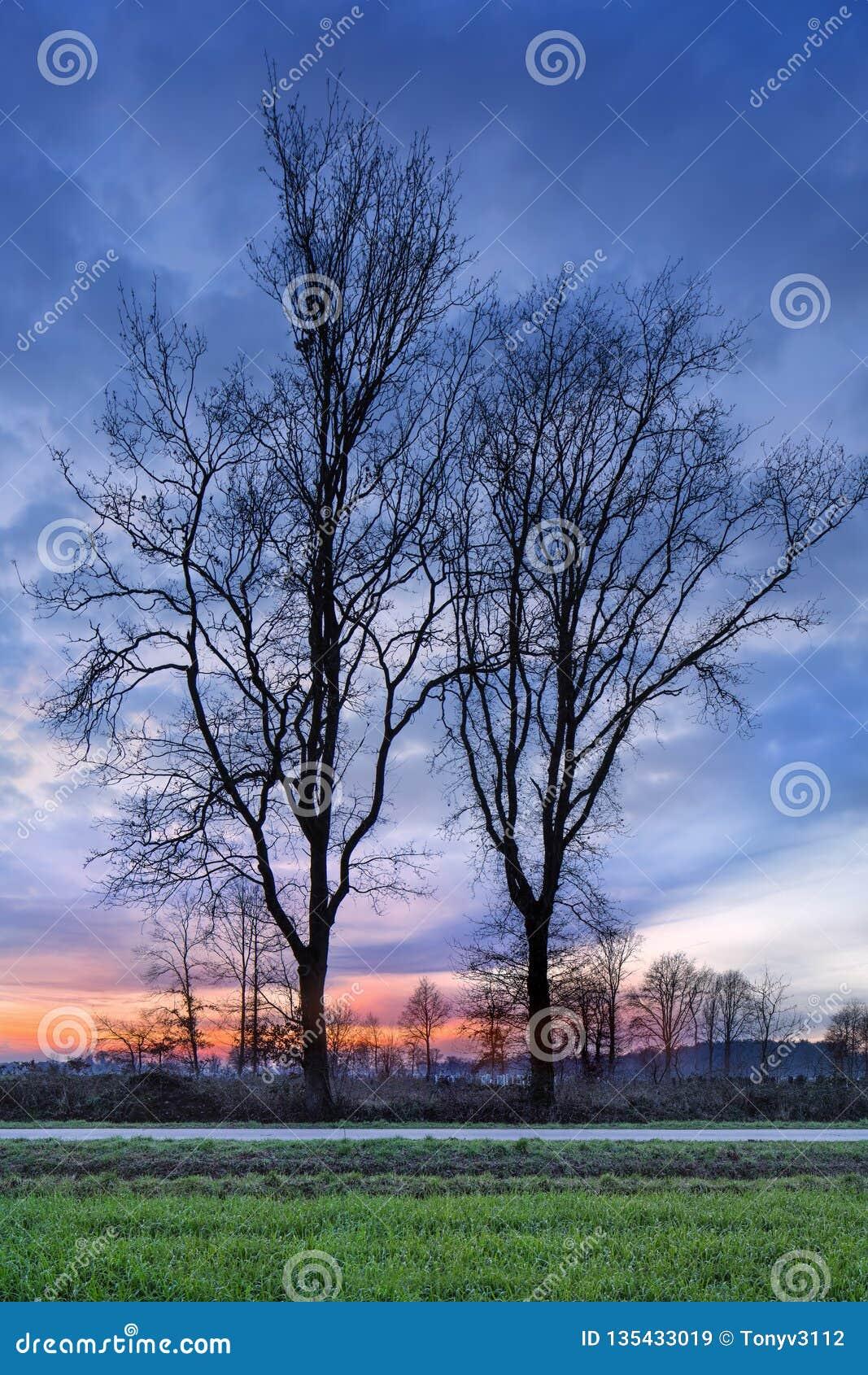 Plattelandslandschap met een rij van bomen en een kleurrijke zonsondergang, Weelde, België