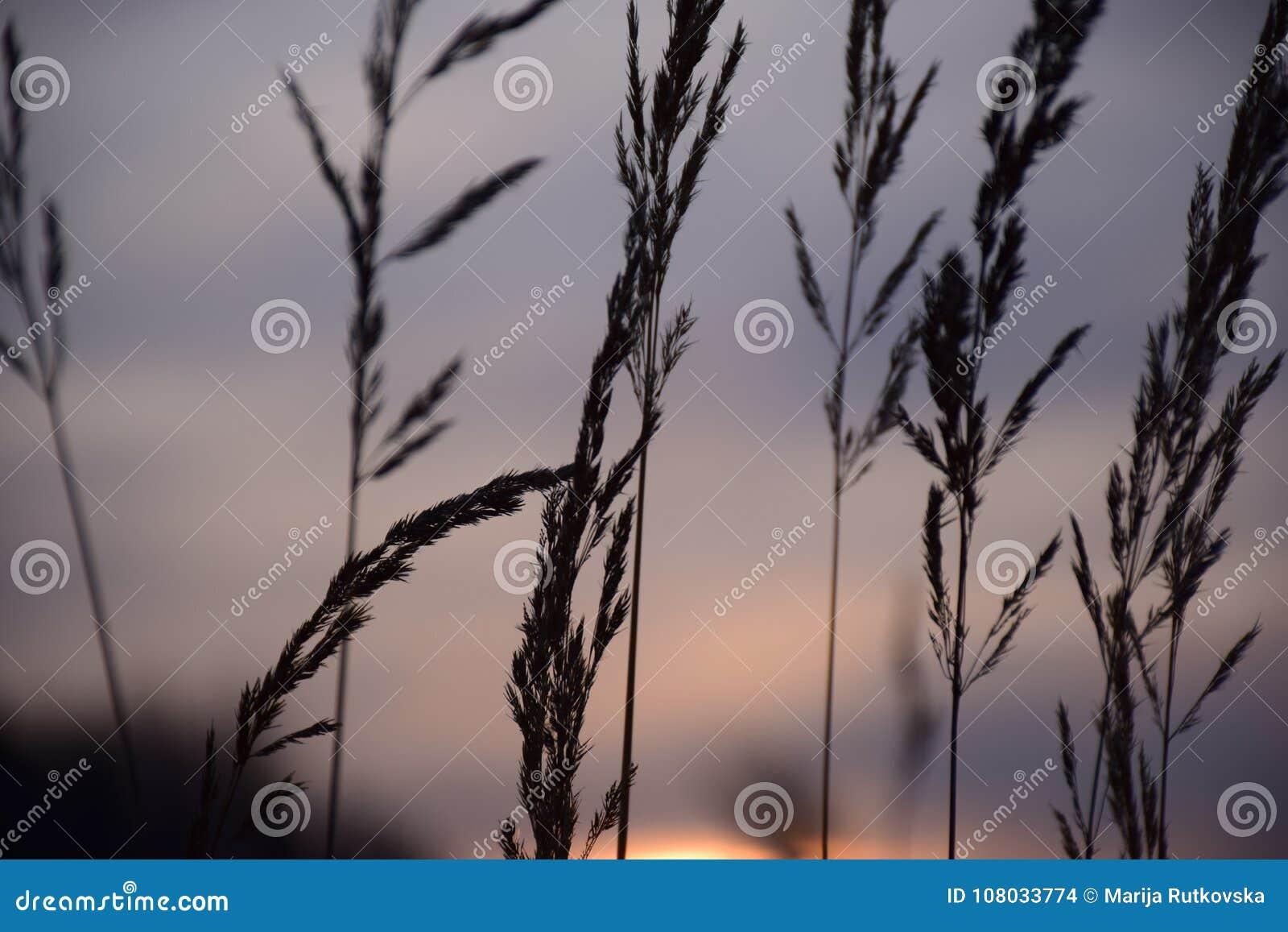 Plattelandszonsondergang met Grey Colored Sky
