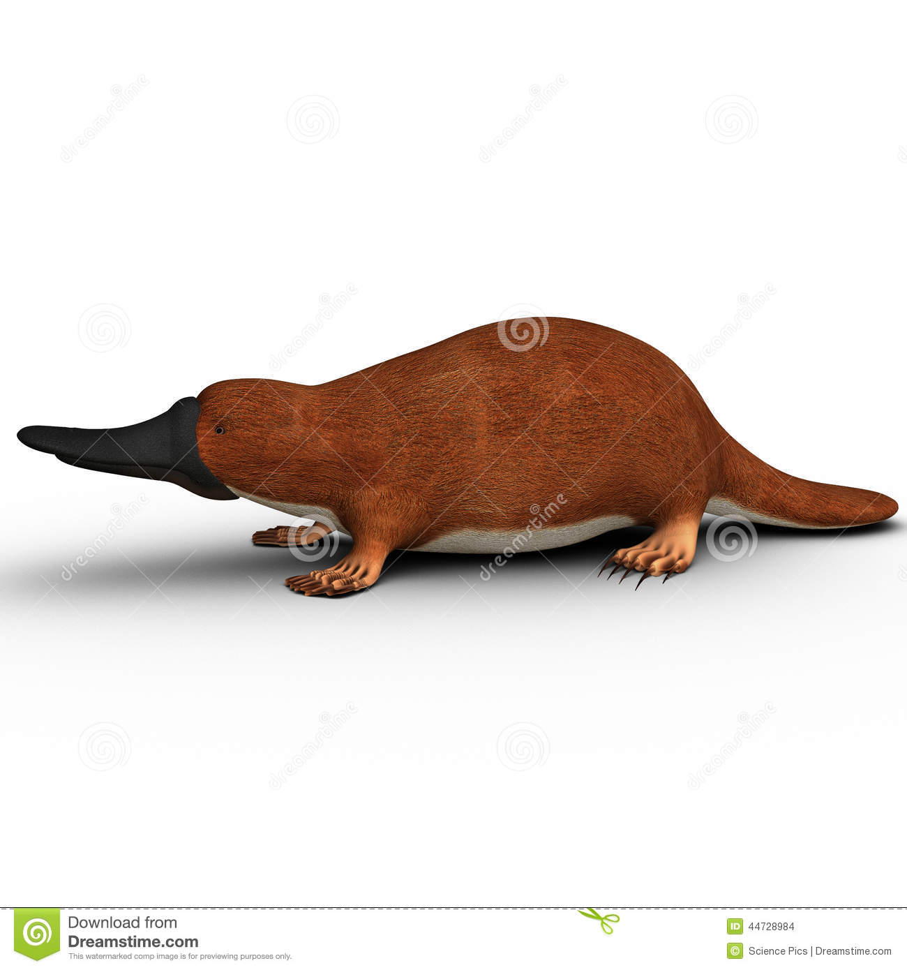 platypus stock illustration image 44728984