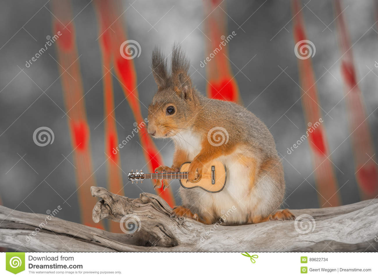 play a song for me stock photo image of eyes rodent 89622734