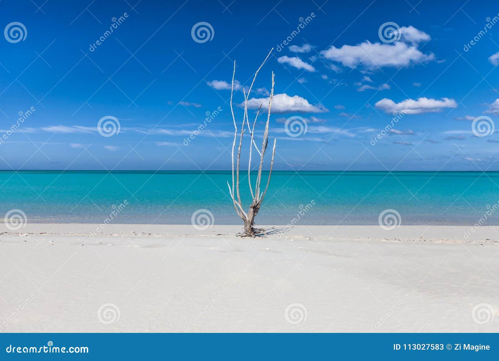 Playa blanca de la arena del paraíso tropical