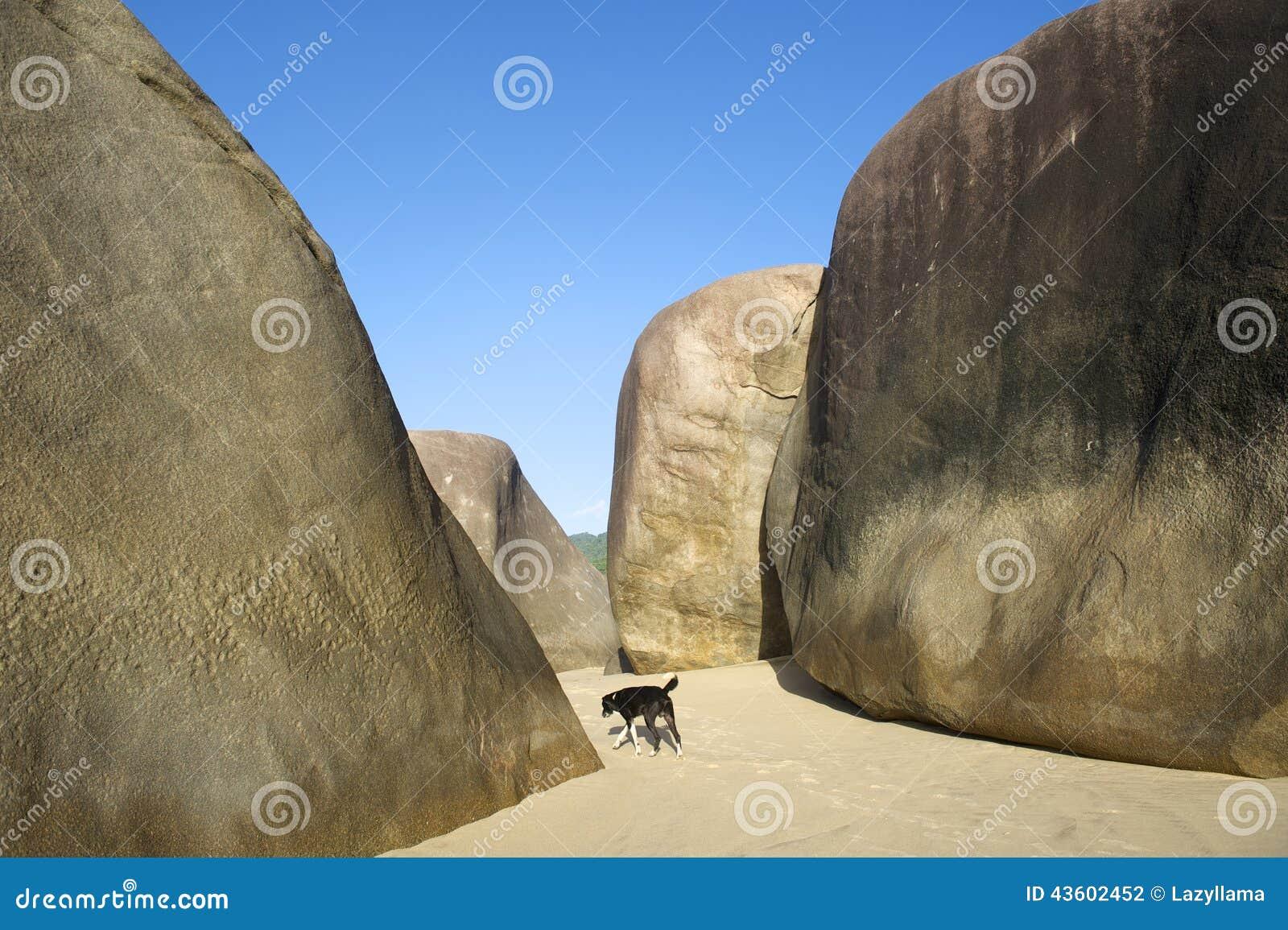 Playa brasileña en Trindade Paraty el Brasil con el perro