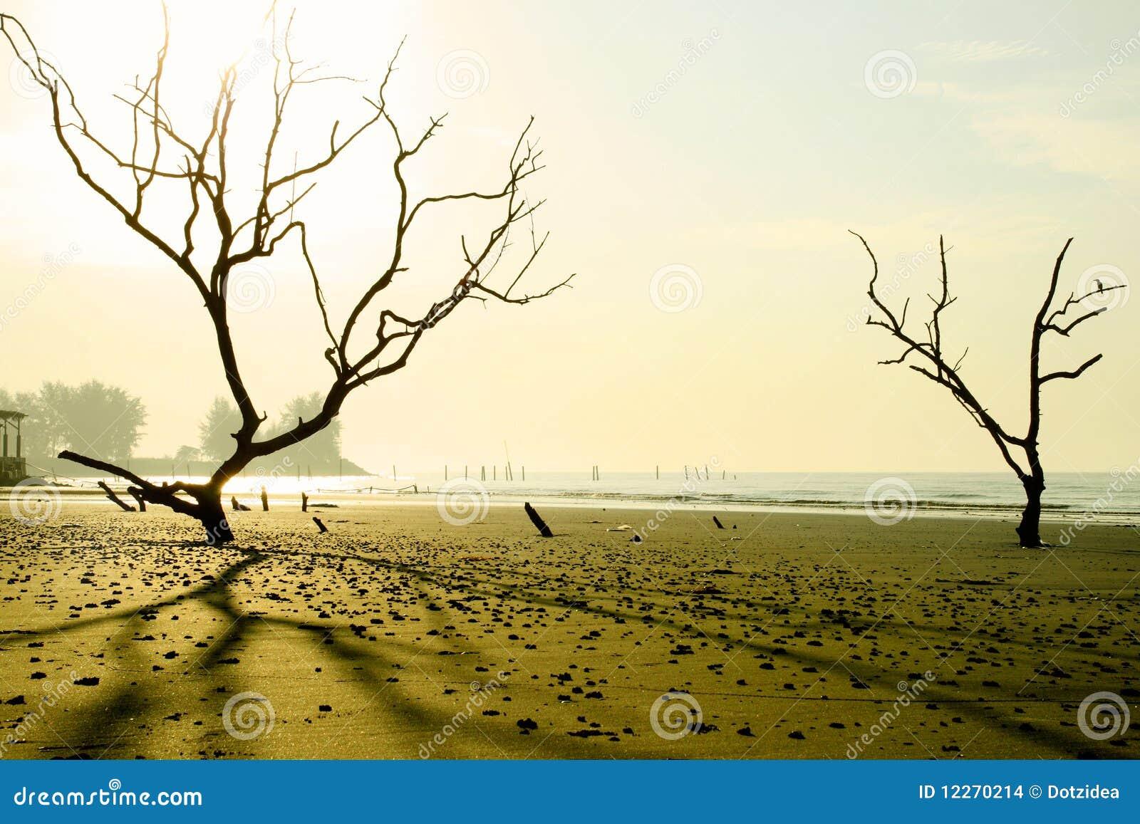 Playa del misterio