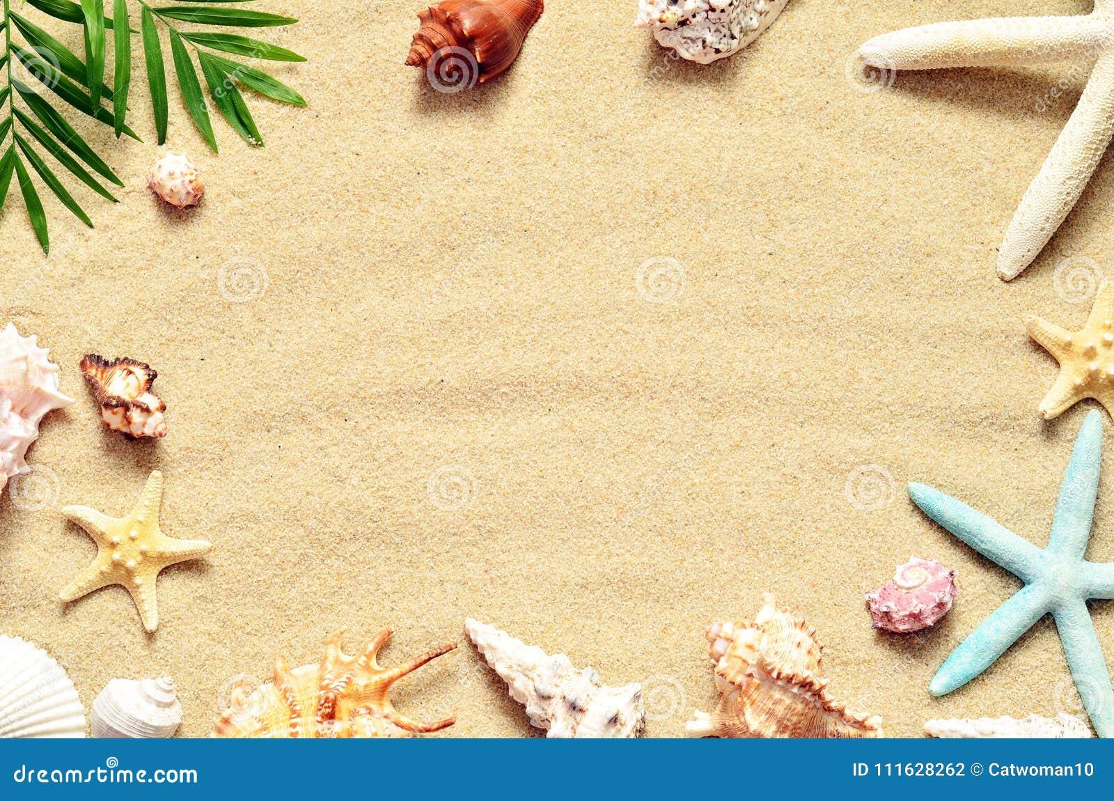 Playa del verano Estrellas de mar y concha marina en la arena