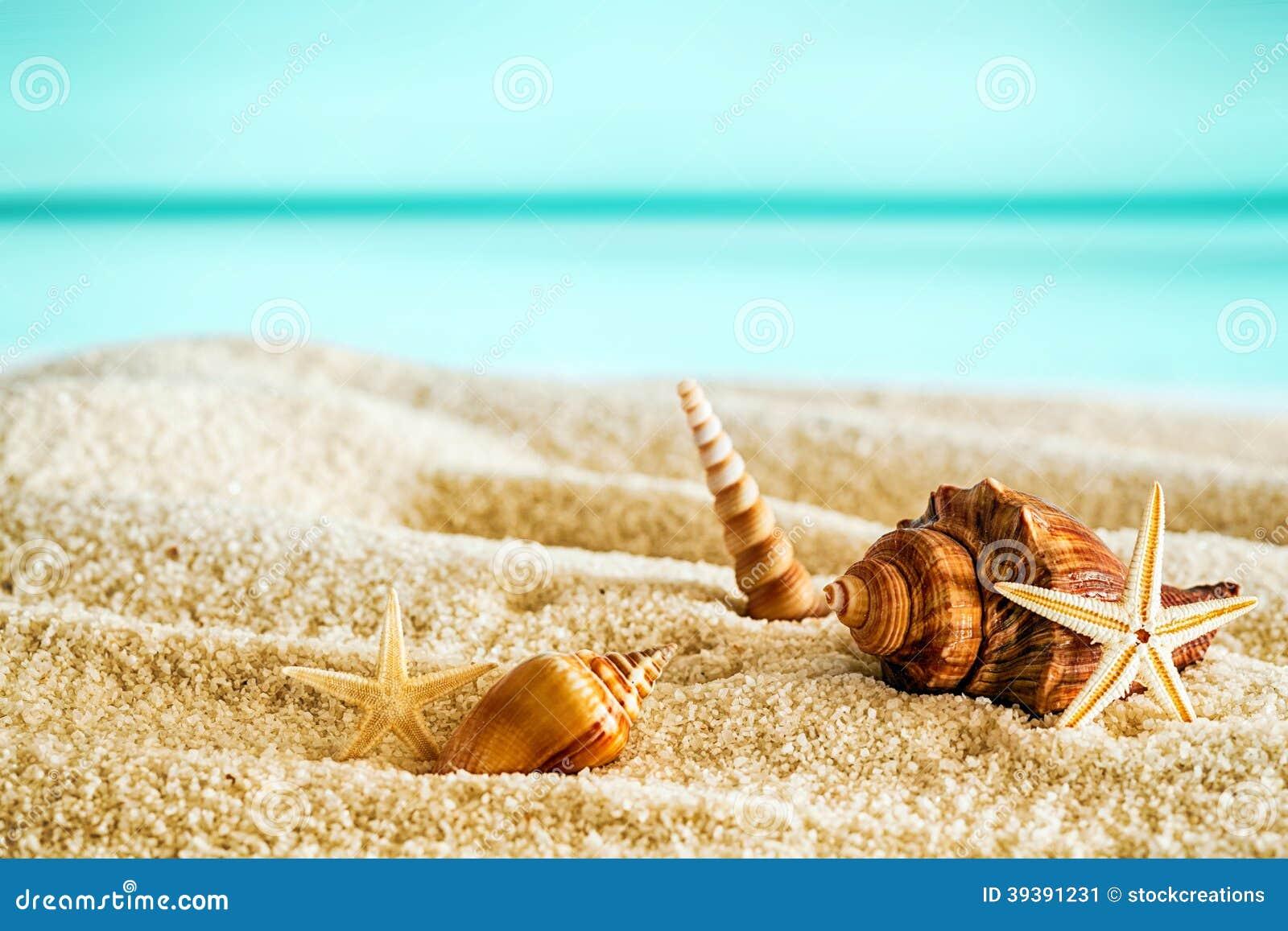 Playa tropical hermosa con las conchas marinas