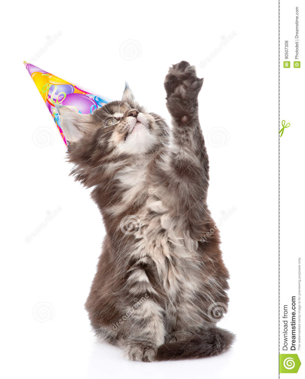 Playful Cat With Birthday Hat Looking Up Isolated On White