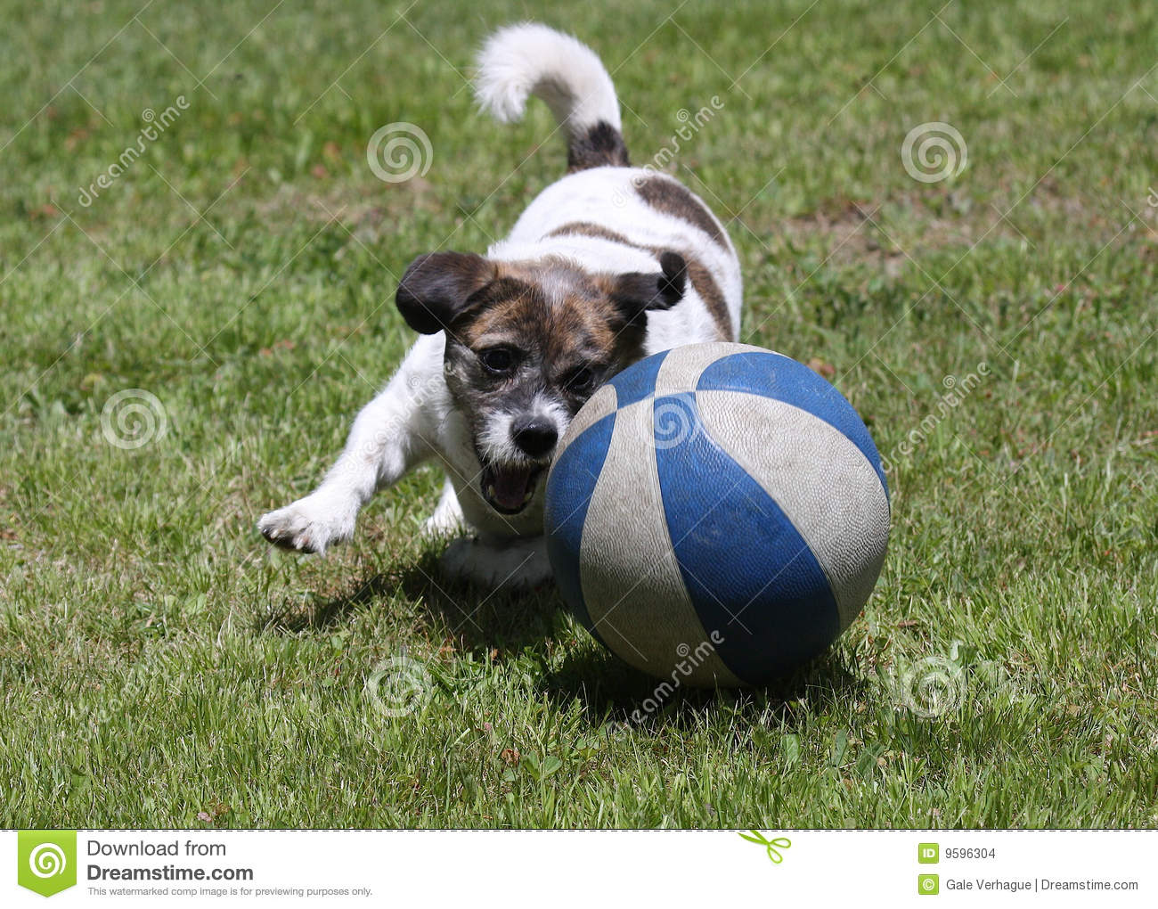 playful dog stock images   image 9596304