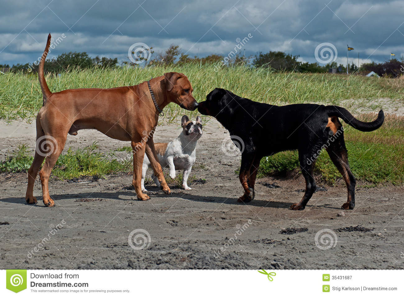 3 Playful Dogs On The ...