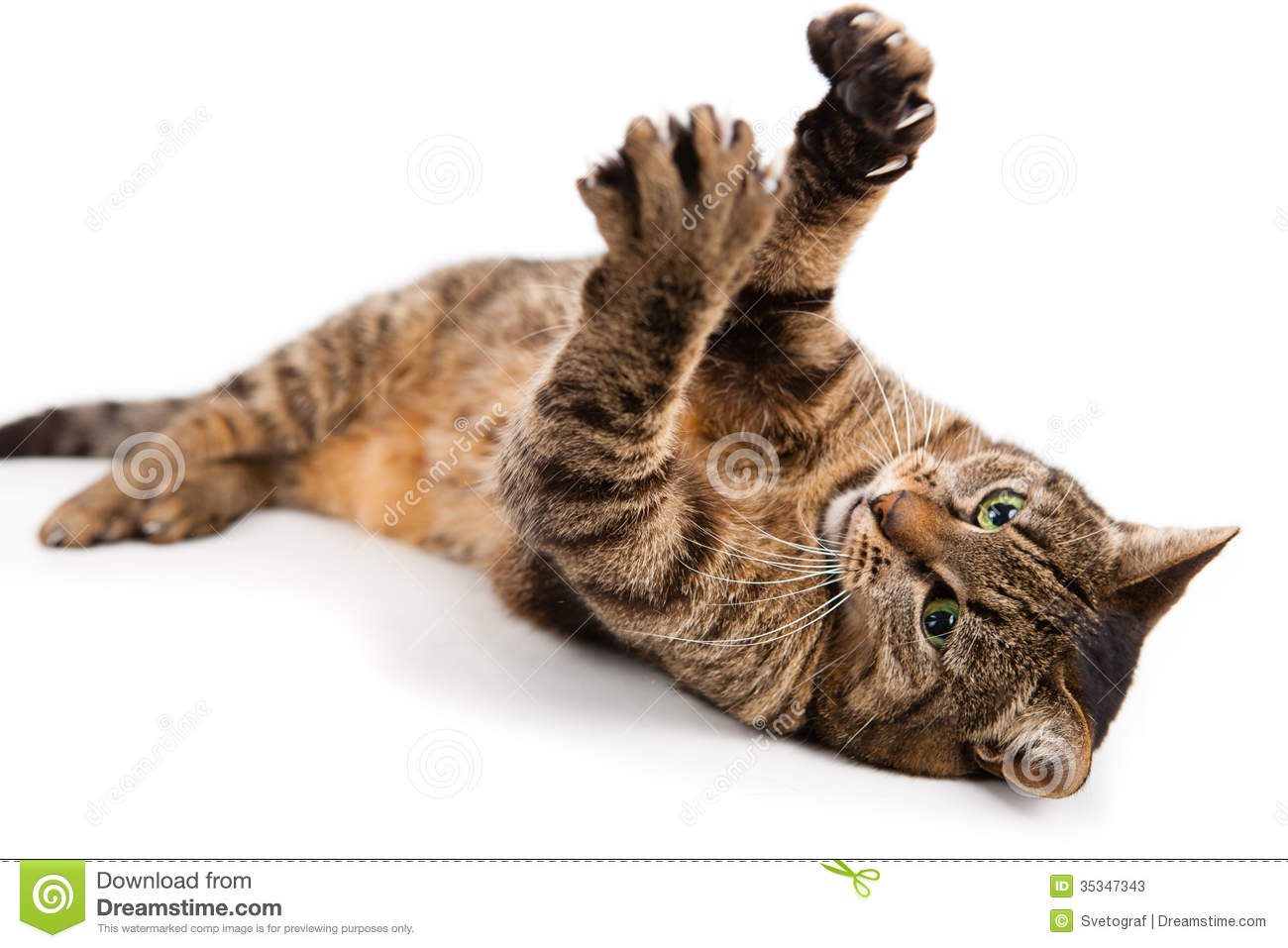 Playful kitty Cat stock image Image of view front background