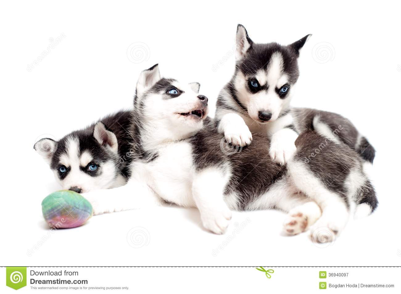 Playful Puppy Dogs Royalty Free Stock Photography - Image ...