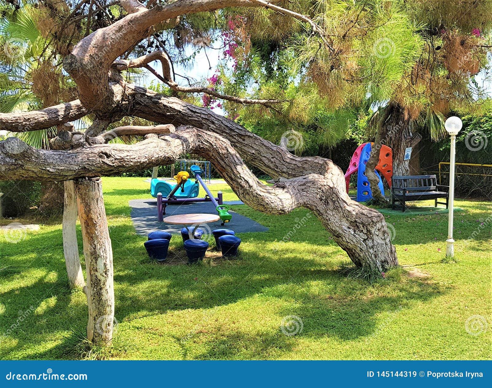 Playgroumd, sosna i bougainvillea w ogródzie rodzinny hotel, Kemer, Turcja