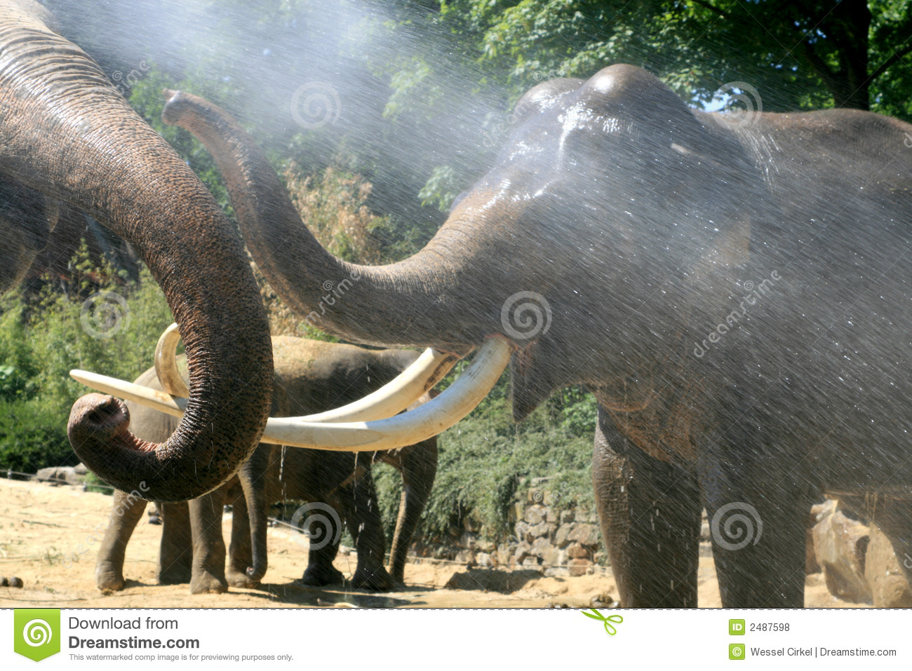 Playing elephants in summer