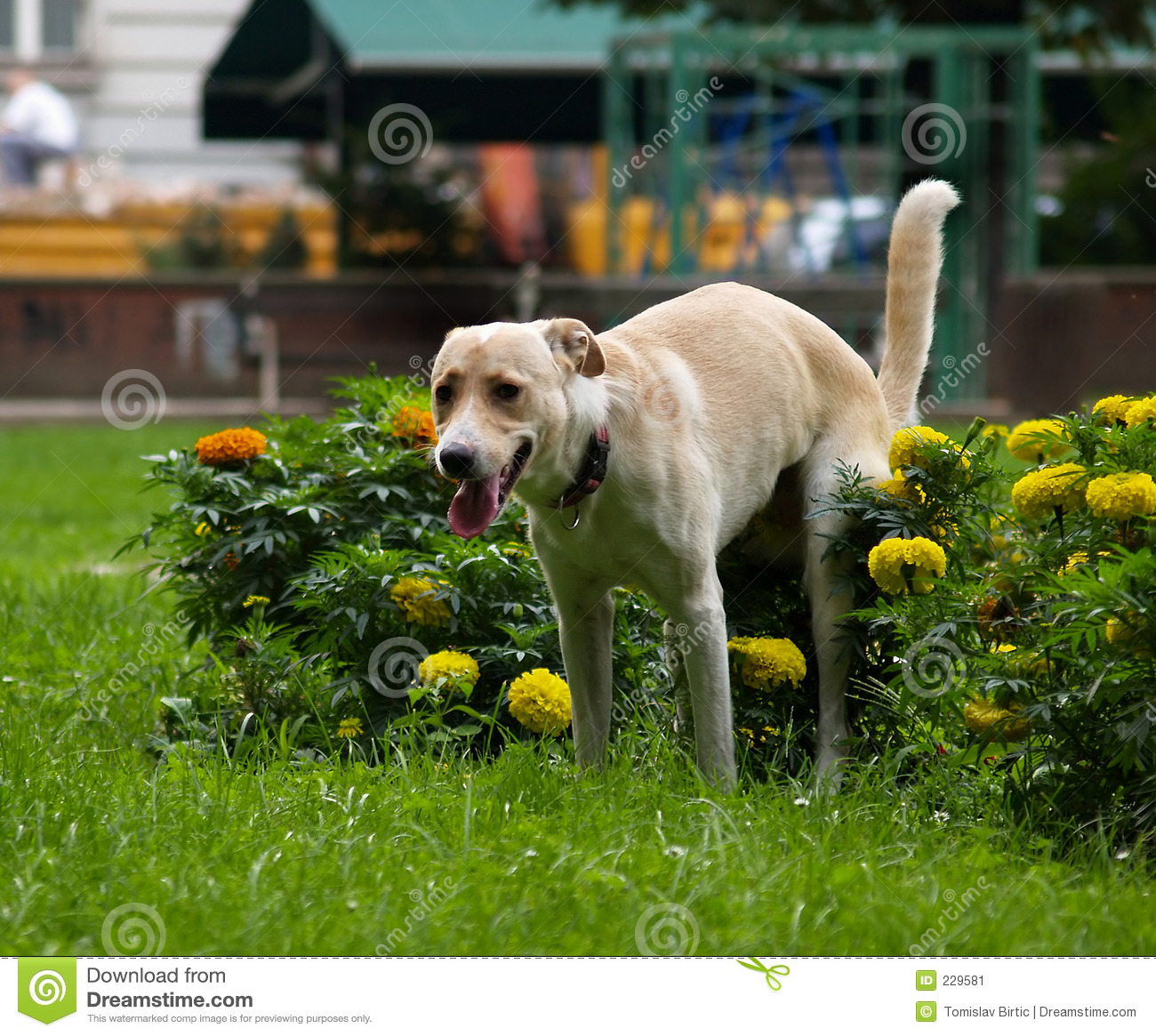 Please Dont Be Angry With Me Stock Image Image Of Colors Dogs