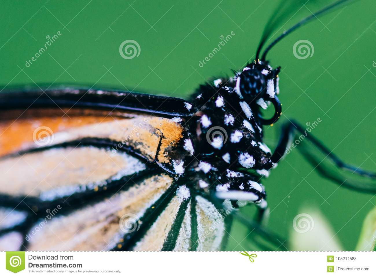 Pleasing look of beautiful butterfly close-up shot