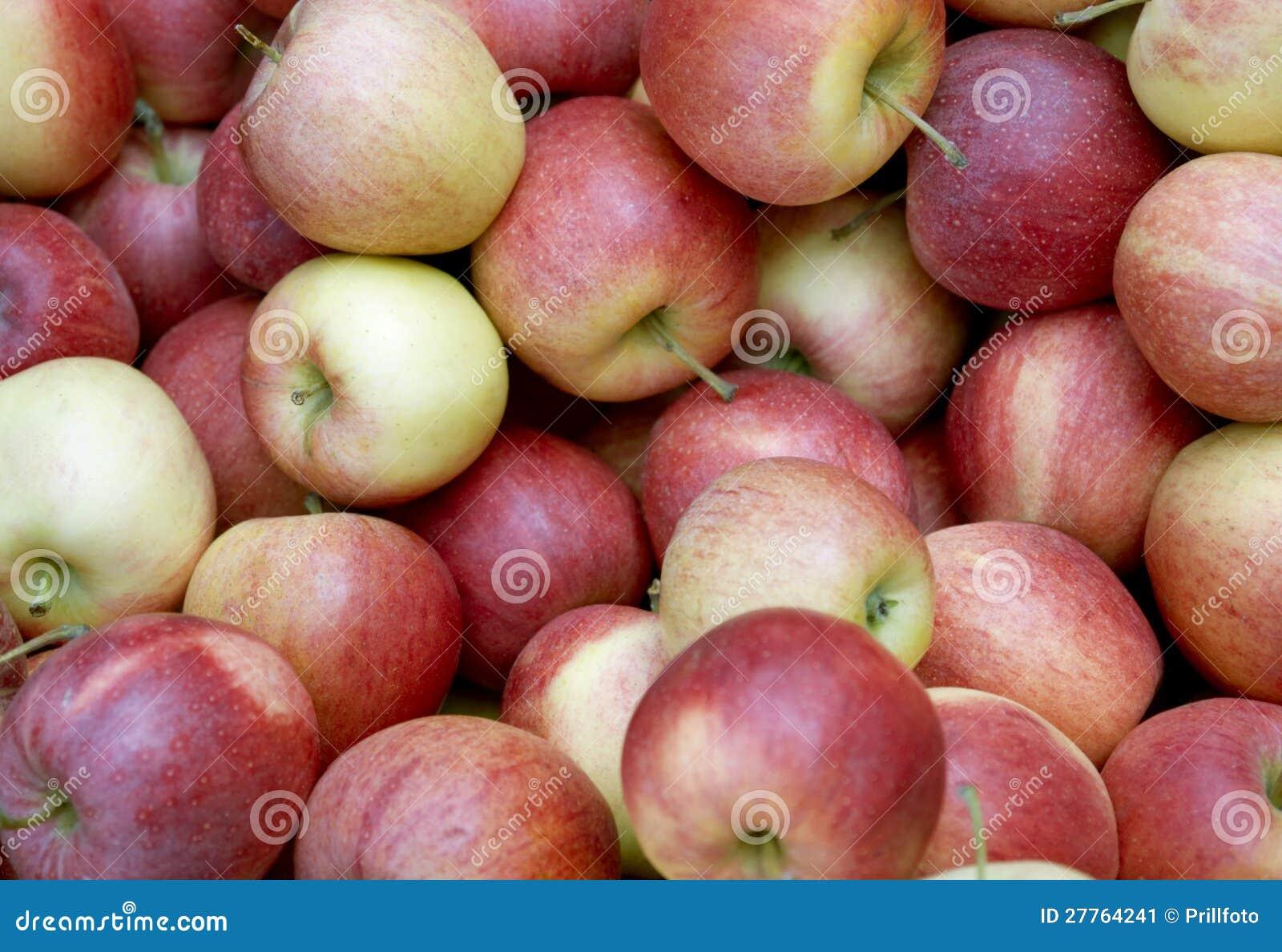 Plein fond de pomme de cadre