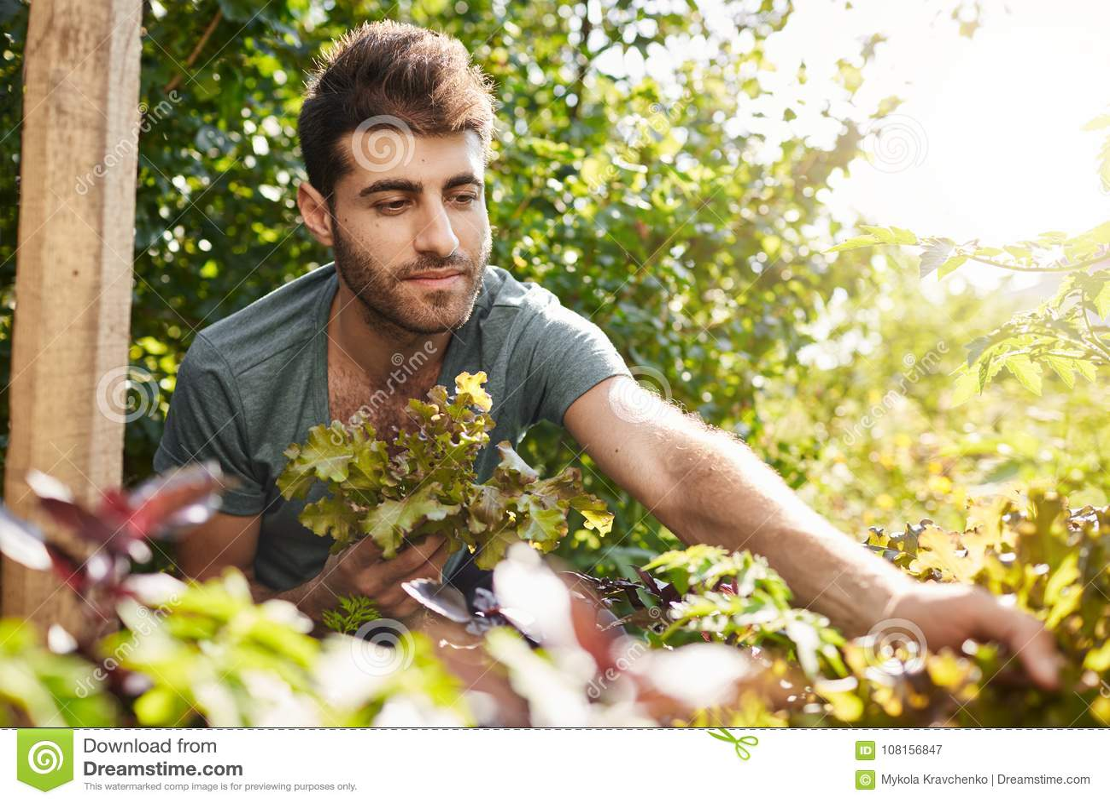 Plenerowy portret atrakcyjna młoda brodata caucasian ogrodniczka w błękitnej koszulce pracuje w ogródzie, zbieracka sałatka
