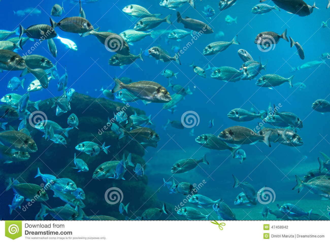 Plenty of fish stock photo image 47458942 for Planty of fish