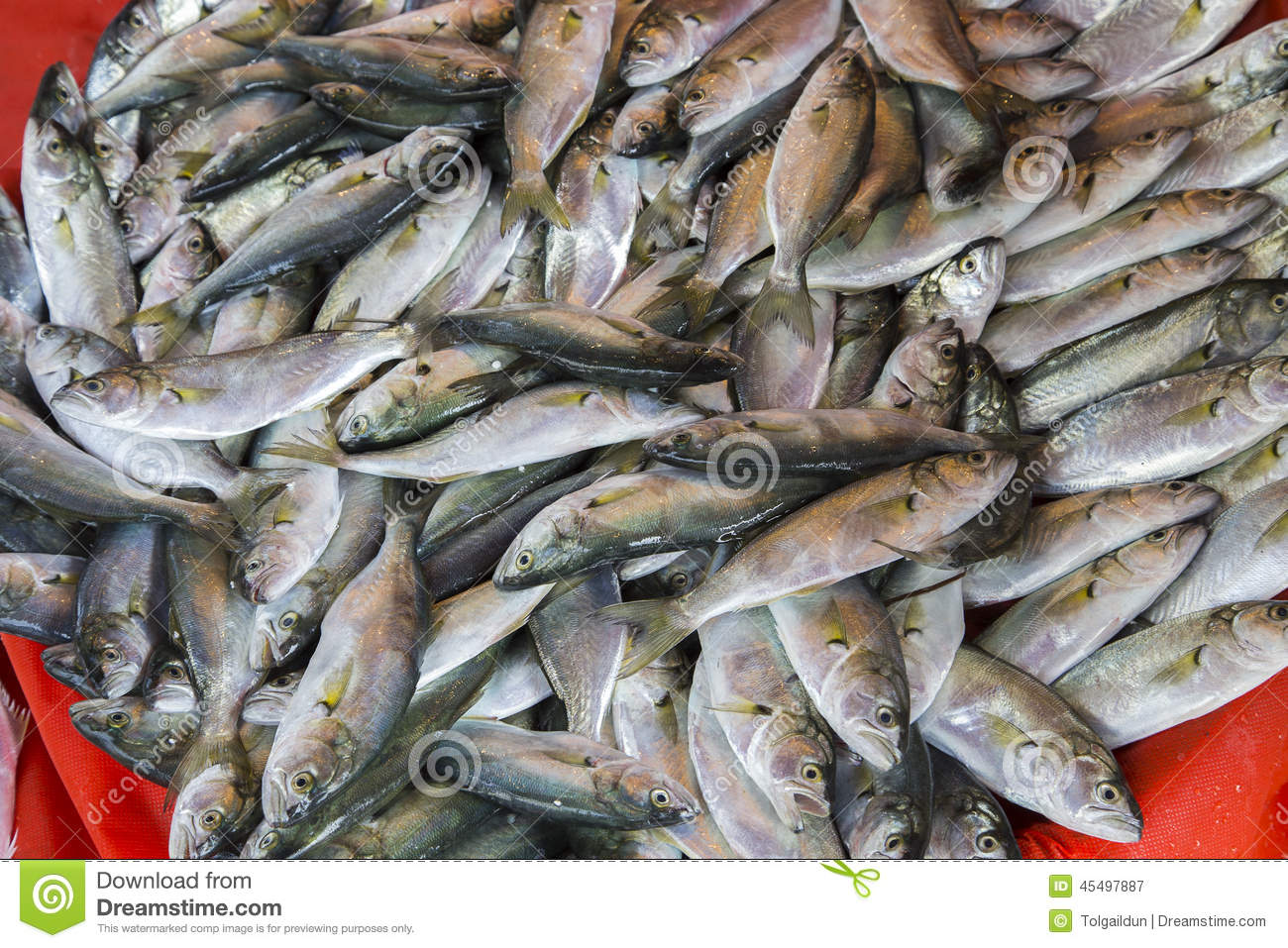 Plenty of fresh fishes in a market stock photo image for Plenty of fish cost