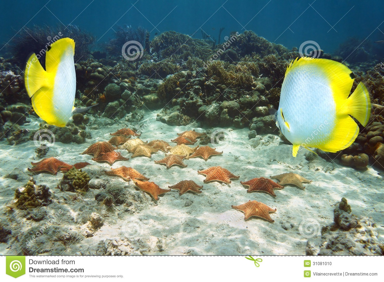 Plenty Starfish On A Coral Reef With Fish Stock Photo