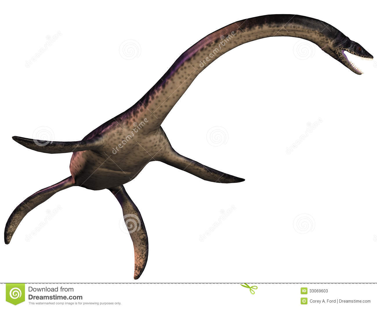 Plesiosaurus was a marine predatory reptile in the Jurassic Era.