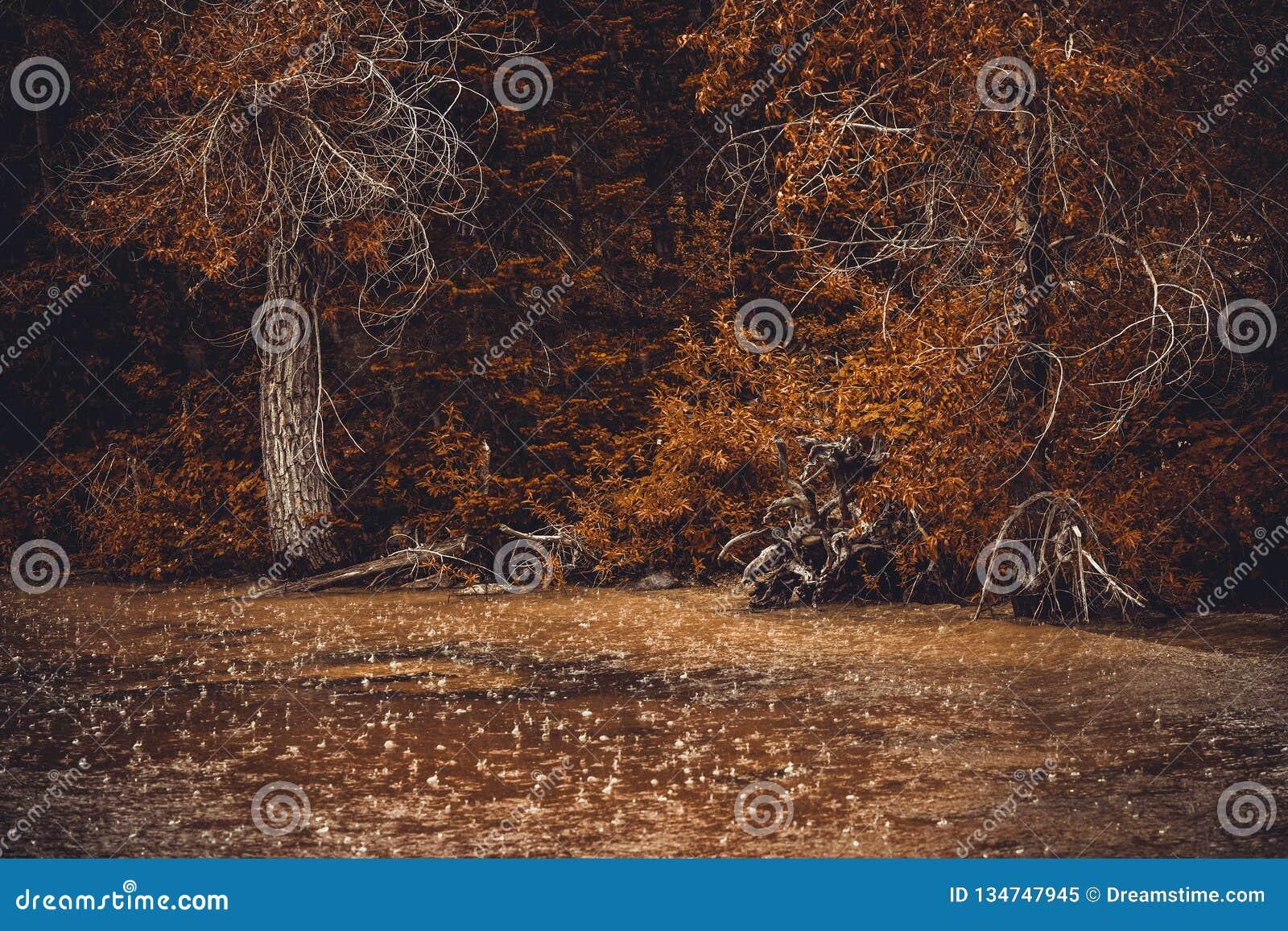 Pleuvoir sous la forêt d automne de forêt et la forte pluie Gouttes de pluie sur l eau