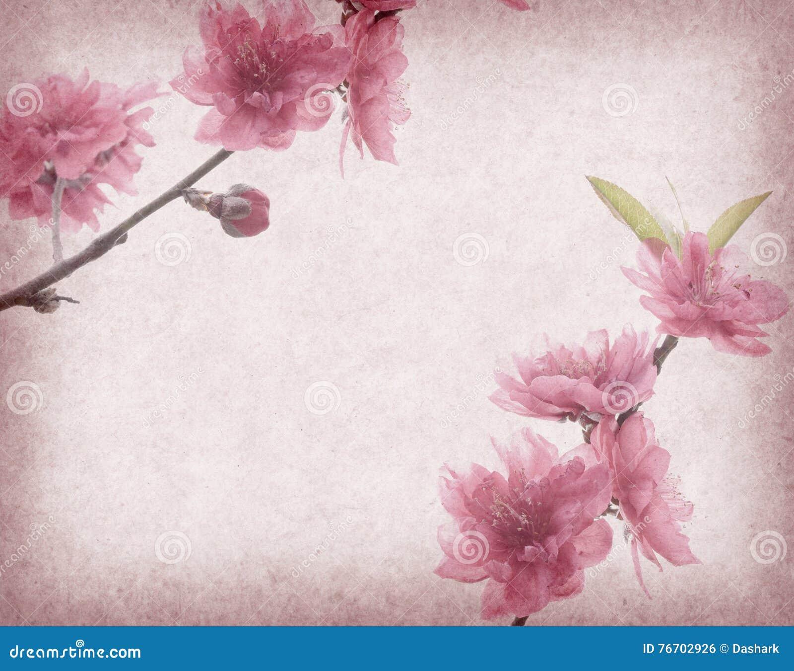 Plommonblomning på gammalt antikt tappningpapper